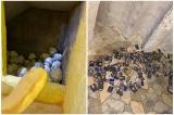chùa Kỳ Quang 2, hàng trăm hũ tro cốt bị vứt xó