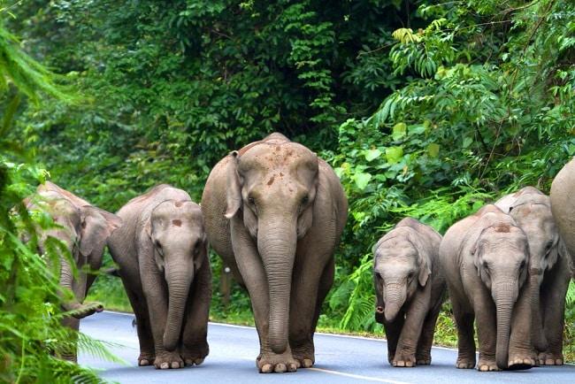 Vườn quốc gia Khao Yai