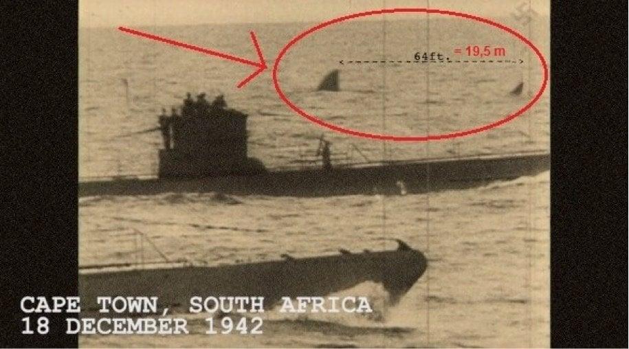 Bức ảnh chụp một loài động vật có thể là megalodon bên cạnh tàu ngầm của quân Nazi vào ngày 18/12/1942 tại thành phố ven biển Cape Town, Nam Phi. (Ảnh: Internet)