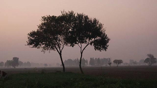 (ảnh: Wiki)