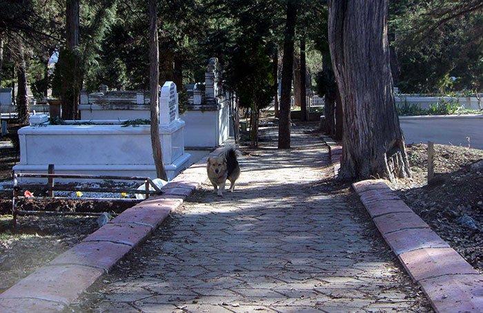 Chó thăm mộ chủ