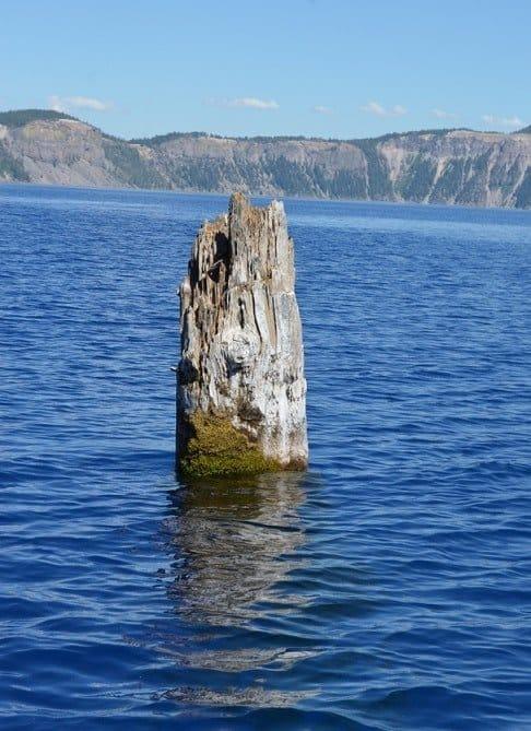 The Old Man of the Lake, khúc gỗ kỳ lạ