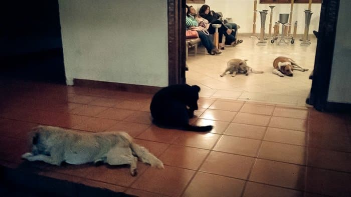 stray-dogs-pay-respects-funeral-animal-lover-margarita-suarez-yucatan-mexico-15