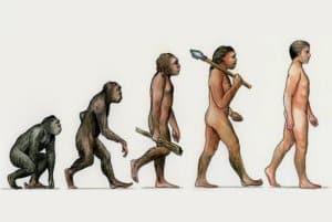 Một bức ảnh minh hoạ quen thuộc về thuyết tiến hoá
