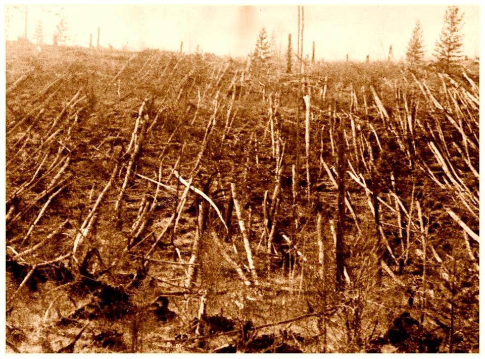 Toàn bộ cây rừng trong phạm vi 2.150 km2 ở Tunguska đã bị cháy đến tận rễ, đổ rạp vì vụ nổ lớn nhất hành tinh (ảnh: thesun.co.uk)