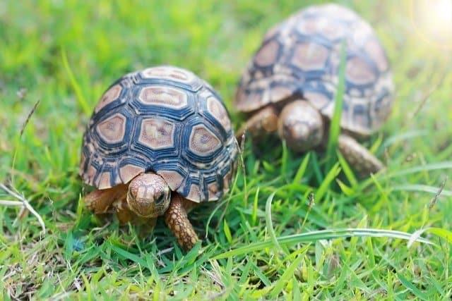 Chuyện nhà rùa đi... picnic