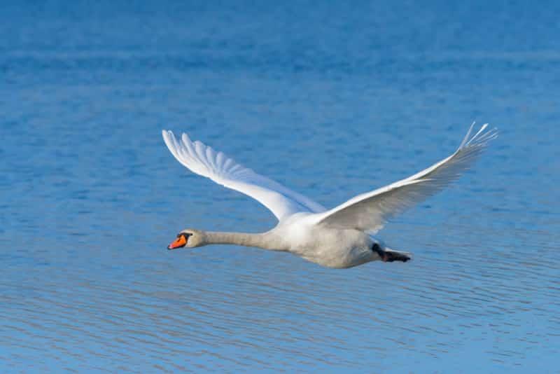 Top 10 loài chim bay cao nhất hành tinh