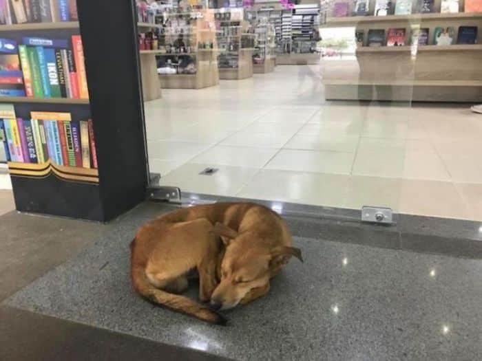"""Chú chó hoang ăn trộm cuốn sách """"Những ngày tháng bị bỏ rơi"""""""