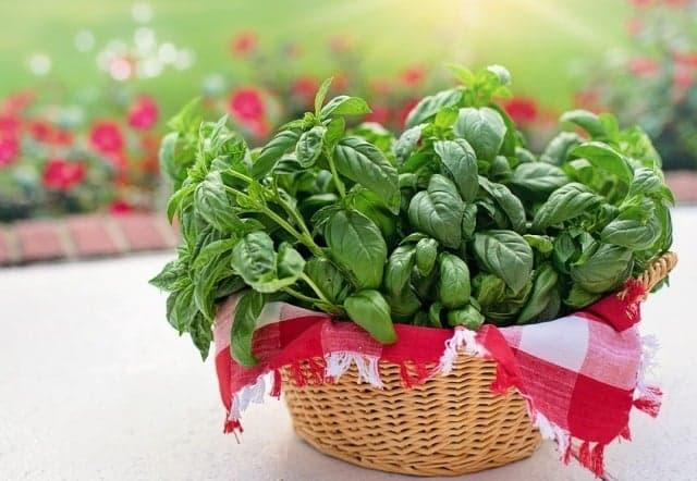 Lợi ích sức khỏe tuyệt vời của 15 loại thảo mộc và gia vị quen thuộc
