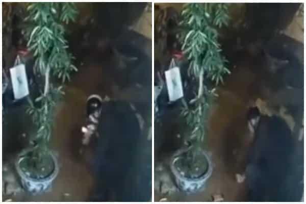nam sinh viên Hà Nội bị bắn tử vong, công an huyện Phúc Thọ