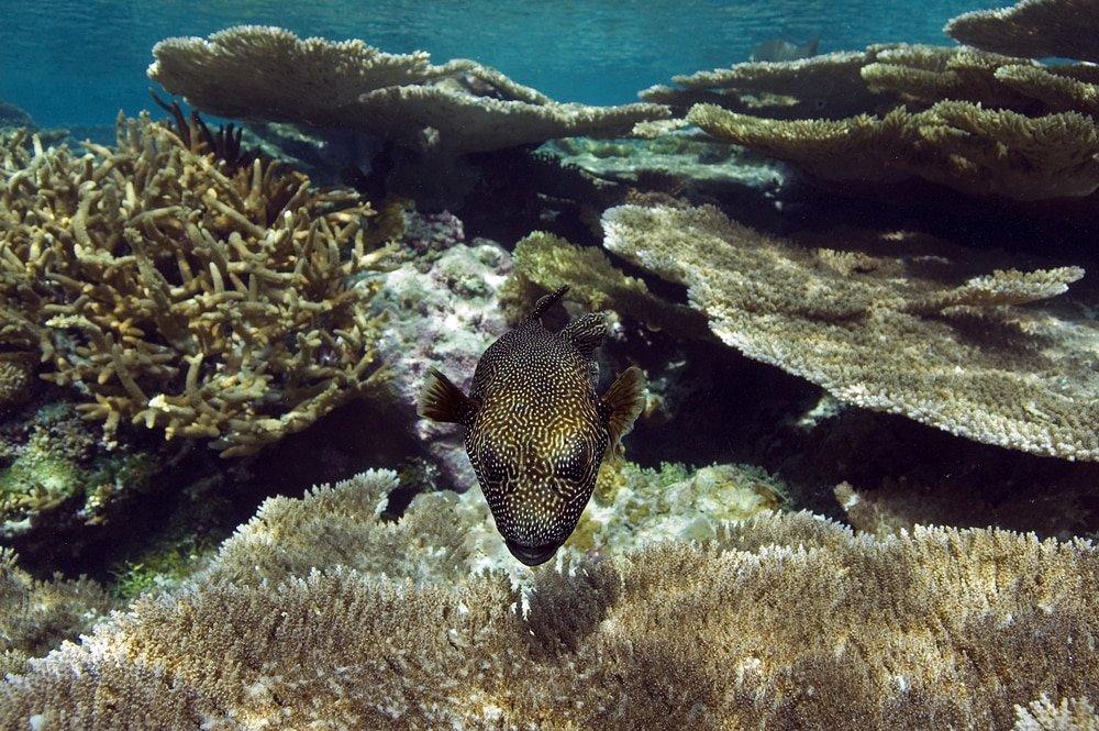 Hòn đảo Palmyra Atoll
