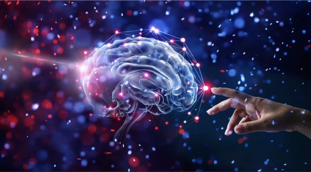 Vai trò của não bộ