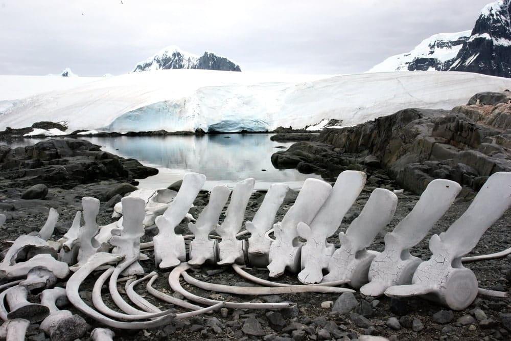 Nam Cực lại có hóa thạch khủng long và động thực vật