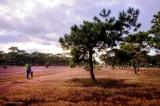 Gia Lai được chuyển mục đích gần 156ha đất rừng để FLC làm sân golf