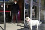 Chú chó chờ nhiều ngày ngoài bệnh viện nơi chủ nhân đang cấp cứu