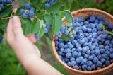 5 loại thực phẩm giúp tinh thần minh mẫn