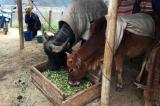 Hơn 2.200 gia súc chết rét; Bắc Bộ tiếp tục đón không khí lạnh mạnh