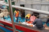 Nghệ An: Tàu cá bị đâm chìm trên biển, 8 ngư dân bám mảnh ván kêu cứu trong đêm
