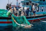 Thêm 16 ngư dân Việt Nam bị phía Malaysia bắt giữ