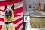 Chú chó lập công lớn nhờ phát hiện ma túy giấu trong ngũ cốc ngô