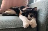 Gia đình Mỹ thoát chết nhờ nhận nuôi một chú mèo hoang