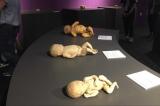 triển lãm cơ thể người