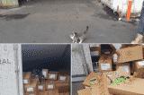chú mèo sống sót
