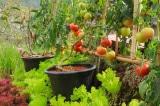Học hỏi cách trồng một khu vườn container xinh xắn của bà mẹ 4 con