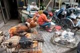 Bắc Kinh bùng phát cúm gia cầm độc tính cao H5N8