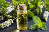 4 lợi ích sức khỏe được khoa học chứng minh của tinh dầu bạc hà