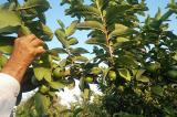 Một mình trồng 10.000 cây trong suốt 15 năm, biến vùng đất cằn cỗi thành vườn cây ăn quả