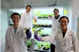 """NTU: Phát triển thành công thiết bị """"giao tiếp"""" với thực vật bằng tín hiệu điện"""