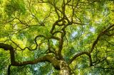 Cô gái cứu cây cổ thụ bằng cách sống trên nó hơn 2 năm