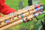 cây sáo, loại sáo