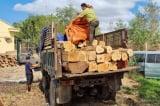 Gia Lai: 119 cây gỗ lớn thuộc rừng phòng hộ bị đốn hạ