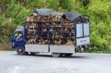 Việt Nam: Phạt đến 3 triệu đồng nếu đánh đập, hành hạ tàn nhẫn vật nuôi