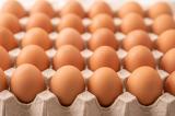 Nông dân Mỹ: Đặt trứng gà theo cách này để giữ được độ tươi