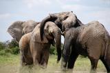 Báo ứng? Nghi phạm săn bắt trái phép ở Nam Phi bị voi giẫm chết