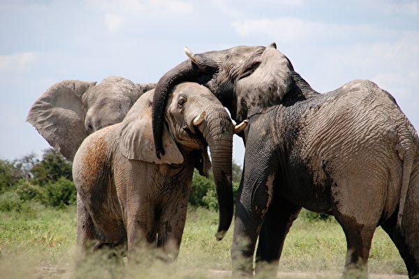Con voi, đàn voi, quả báo
