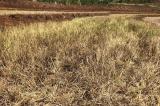 Làm sân golf ở Gia Lai: Nguy cơ xung đột nguồn nước