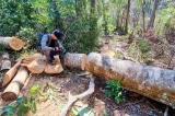 Sau hơn 200 vụ phá rừng phòng hộ, rừng nguyên sinh, 4 trưởng BQL bị tạm đình chỉ