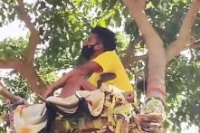 Ấn Độ: Chàng trai trẻ lên cây sống cách ly dịch