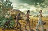 Nghiên cứu: Thuyết tiến hóa loài người đối mặt với thách thức nghiêm trọng từ hóa thạch
