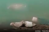 Hơn 150 thi thể bị nghi là chết do COVID-19 trôi dạt trên sông Hằng ở Bihar, Ấn Độ