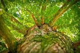 """Chàng trai Ấn Độ dương tính với Covid leo lên cây sống để """"tự cách ly"""""""