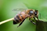 Video 2 con ong cùng hợp sức để mở nắp chai nước ngọt