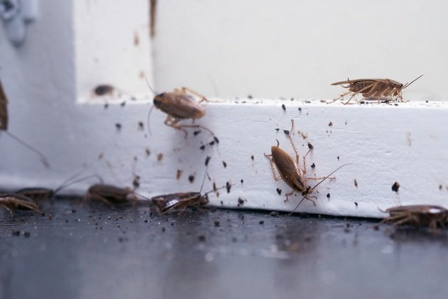 côn trùng