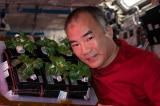 Các nhà khoa học NASA trồng thành công rau sạch trong không gian