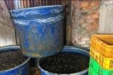 TP.HCM: Phát hiện hai cơ sở ngâm hơn 2 tấn ốc bằng hóa chất không rõ nguồn gốc