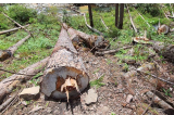 Kiểm lâm Gia Lai có dấu hiệu 'nâng khống giá' khi mua thiết bị bảo vệ rừng